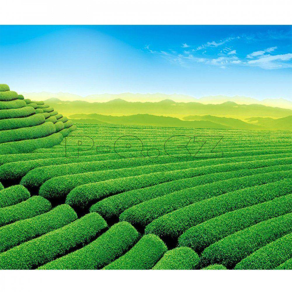 SÁLAVÝ INFRAČERVENÝ TOPNÝ PANEL – OBRAZ: ČAJOVÉ PLANTÁŽE Rozměr:800x600x1mm Příkon:500w